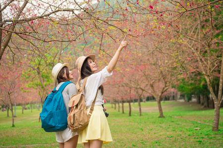 日本で有名な桜の木公園を訪問し、美しい桜の花を指す共有旅行でガール フレンドと風景を楽しんでいる若い女性バックパッカー。 写真素材