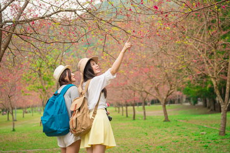 young female backpackers visiting famous cherry tree park in japan and pointing beautiful sakura flowers to sharing enjoying the scenery with girlfriend in trip. Banco de Imagens