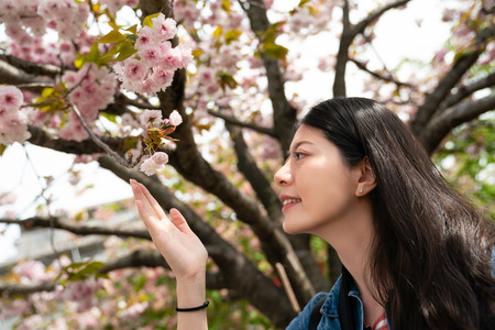 beautiful asina female touching blossom sakura by hand and looking very enjoyable with a pretty smile.
