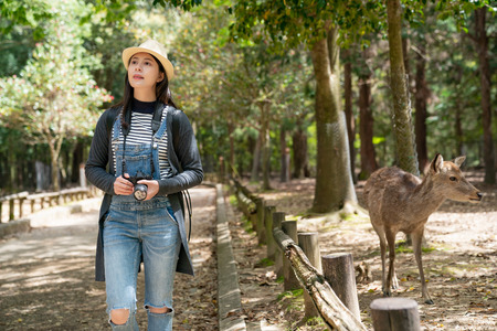 an elegant female photographer relaxing walking in the park and the deer nearby is walking with her 版權商用圖片