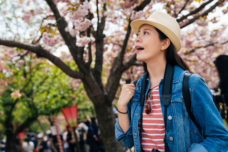 woman traveler excited looking up pink beautiful sakura flower on the brunch. young lady traveler opening mouth feel surprised enjoy the beauty of the cherry blossom tree in osaka mint.