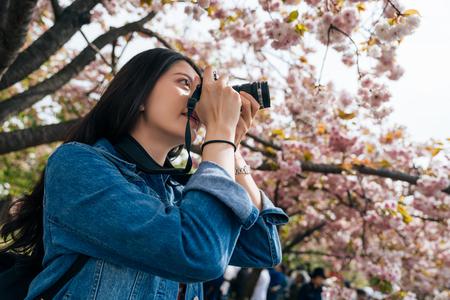 jong meisje permanent onder sakura boom in het park in het voorjaar. mooie vrouw professionele fotograaf liefde hobby fotograferen van de roze kersenbloesem. elegante dame met dslr-camera. Stockfoto