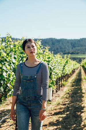 asian farmer harvesting grapes in a vineyard on sunny day in spring. young lady host winemaker walking in grape field winery in napa valley san francisco america. elegant woman wearing overalls.