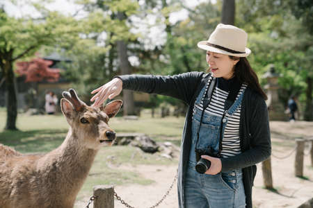 taiwanese woman is stroking gently on the head of the deer. asian tourist carrying camera is interacting with the tame wild animal. Zdjęcie Seryjne