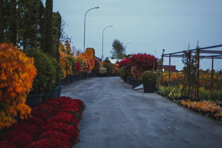 autumn alley in the garden center, shop and nursery of plants and flowers Reklamní fotografie