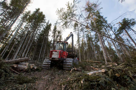 Deforestation. A modern red harvester cuts down conifers on a steep mountainside. Heavy logging equipment works in the taiga in winter