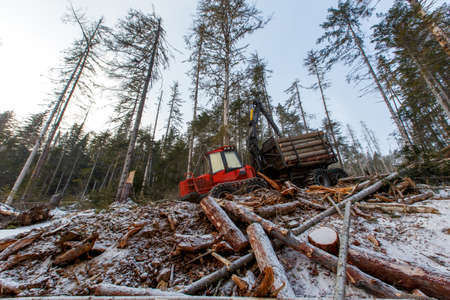 The work of heavy logging equipment in the winter taih. A forwarder, loaded with sawed wood, descends from a steep slope of a snowy mountain to eat coniferous trees