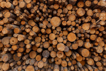 Close-up. Medium of wood in the timber yard. The cut larch lies in an open-air warehouse
