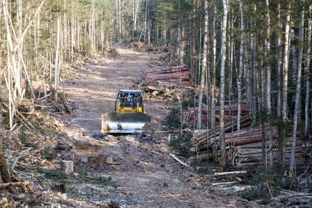Allocated in the winter taiga, where conifers are cut down. A large yellow bulldozer clears forest clearings of small twigs and branches