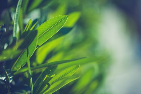 Groene verse planten gras close-up voor achtergrond