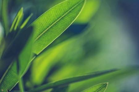緑の新鮮な植物の草の背景のクローズ アップ
