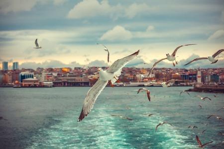 페리에서 갈매기, 갈매기의 무리 이스탄불 사진 스톡 콘텐츠