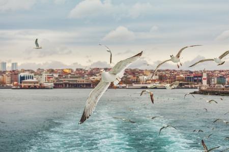 gaviota: Gaviota Estambul, Bósforo, Turquía. Vuelo de la gaviota sobre el mar,