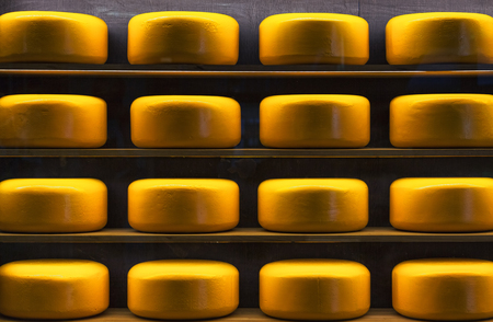 maturing: Wheels of cheese in a maturing storehouse dairy cellar on wood shelves