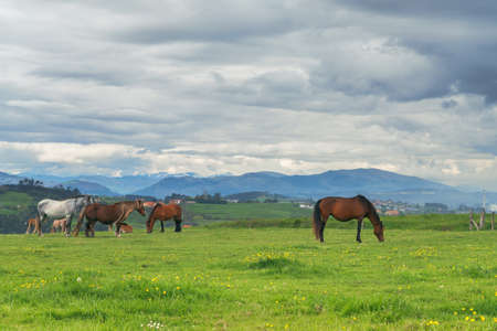 Horses on green grass in the background of the mountain landscape and stormy sky