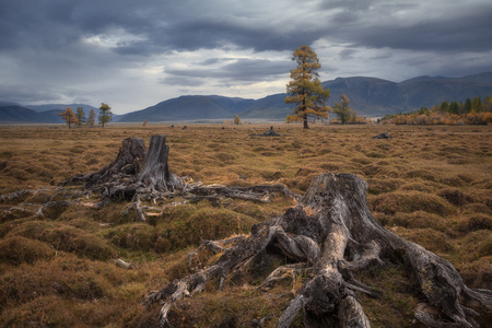 Old stumps on a background of a gloomy autumn landscape Stock Photo