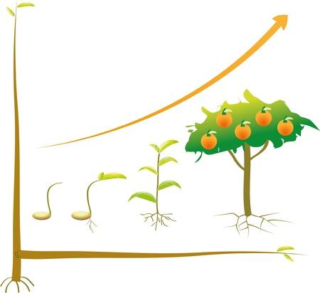 Zaad zakelijke grafiek van begin tot succes.