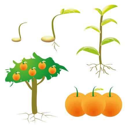 saplings: Isolated picture chart growth plant.