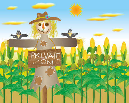 cornfield:  Scarecrow in private zone cornfield with the crows  Stock Photo