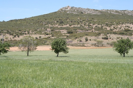 agricultura: Cereal, fields and mountain
