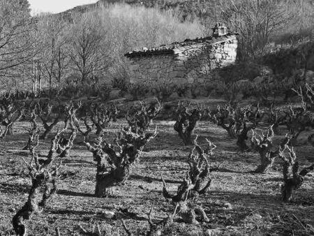 Land Vineyards,