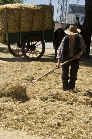 isidro: Work of the country people, the harvest