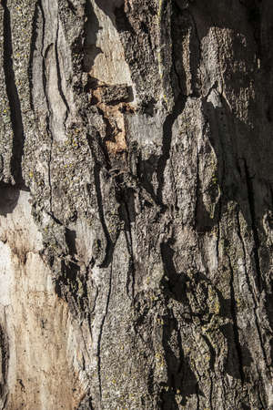 Close up of tree bark, texture