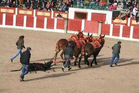 Mulillas glisser sur les taureaux de la plaque Banque d'images - 38140416