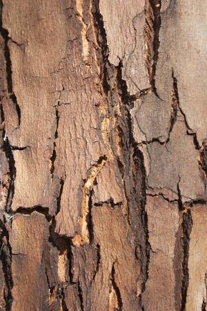 hard crust: wood background texture, tree crust