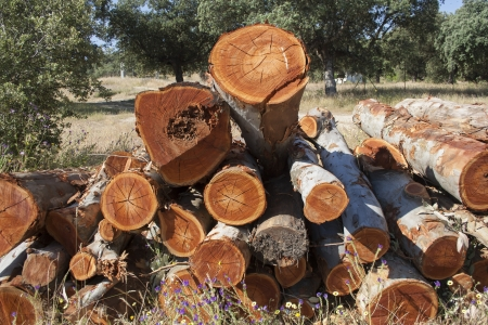 Trees cut wooden logs, tree trunk, Stock Photo
