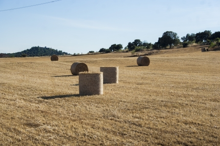 straw bales in a field