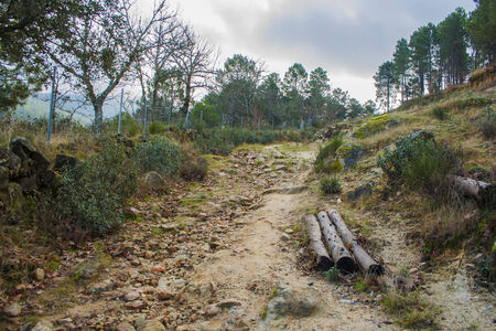 Forest Landscapes and Natural Attractions Stock Photo