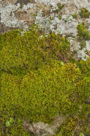mosses: Textures, Materials Stone, mosses lichens, Stock Photo