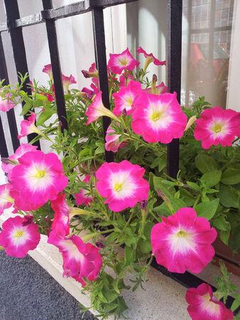 Fleurs Banque d'images - 29874910