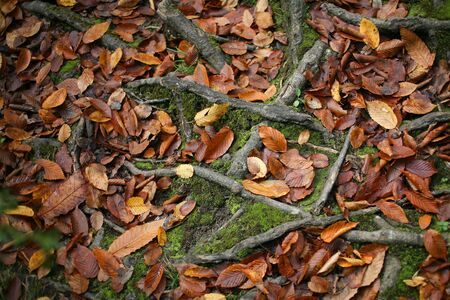 orange leaves laying on a ground