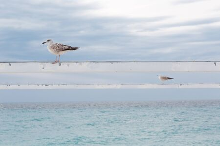 Two seagulls sitting on poles background of sea and sky