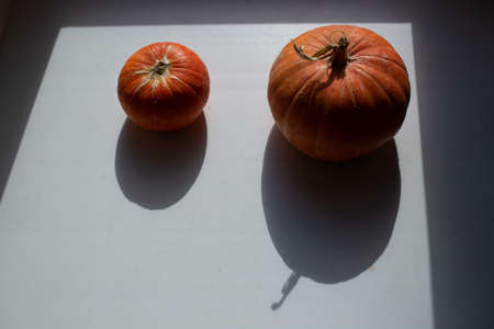 Autumn orange pumpkins overhead view with shadows Stok Fotoğraf