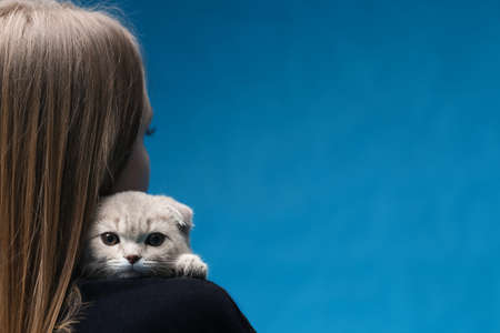 Scottish fold cat sitting on the shoulder of the woman