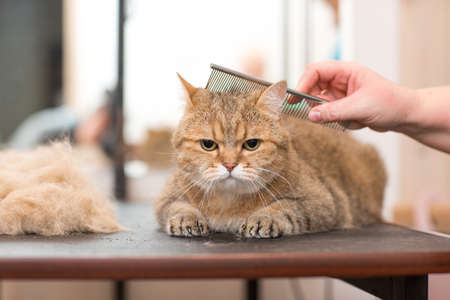 Cat and Pet grooming in beauty salon. Stok Fotoğraf