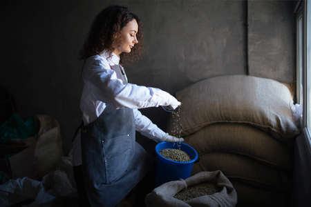 Young woman worker roaster fills green coffee beans jar with scoop. Green coffee beans in burlap sack at coffee roasting company. Coffee trading business concept