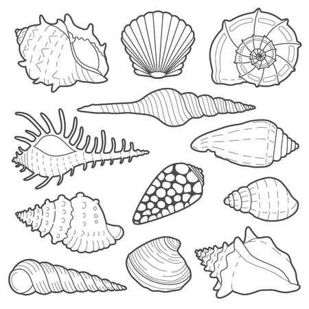 Sea shells vector icon set isolated on a white background Ilustracja