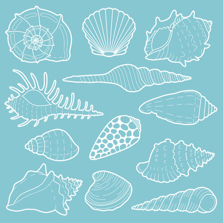 White sea shells vector icon set isolated on background