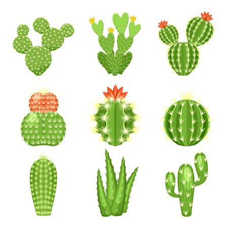 Vector set of colored cactus and succulent plants. Decorative isolated icons illustration. Cartoon style doodles. Ilustração