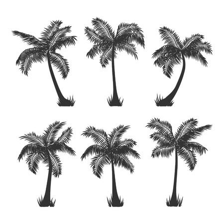 Exotic tropical coconut palm trees silhouette set, isolated on white background. Ilustracja