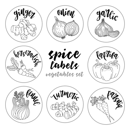fennel: Spices and herbs jar labels and stickers. Contour vector condiment vegetables set with ginger, onion, garlic, horseradish, paprika, fennel, turmeric, parsnip. Botanical illustrations Illustration