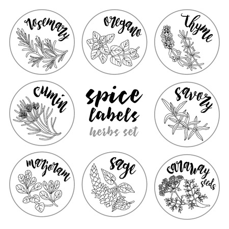 Spices and herbs jar labels and stickers. Contour vector condiment herbal set with rosemary, oregano, thyme, cumin, savory, marjoram, sage, caraway seeds. Botanical illustrations