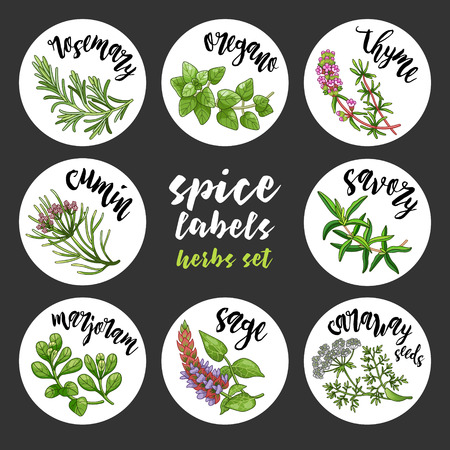 Spices and herbs jar labels and stickers. Colored vector condiment herbal set with rosemary, oregano, thyme, cumin, savory, marjoram, sage, caraway seeds. Botanical illustrations Ilustração