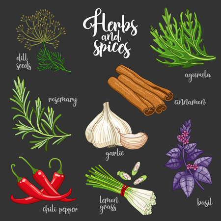 dill seed: Spices and herbs set to prepare delicious healthy food. Colored botanical illustration on dark background with dill seed, rosemary, chili pepper, arugula, garlic, cinnamon, basil, lemongrass.