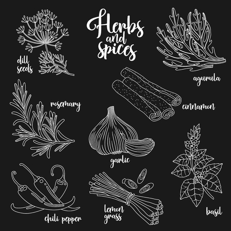 aromatic: Spices and herbs set to prepare delicious healthy food. Contour botanical illustration on dark background with dill seed, rosemary, chili pepper, arugula, garlic, cinnamon, basil, lemongrass.