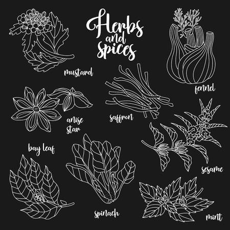 Gewürze und Kräuter auf leckere und gesunde Speisen zubereiten. Contour botanische Illustration auf dunklem Hintergrund mit Senf, Lorbeerblatt, Anis-Sterne, Safran, Sesam, Fenchel, Minze, Spinat.